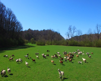 160 Acre Horse Farm in Ellijay